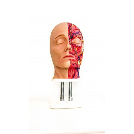 Facial Injection Mannequin